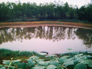 The dirt road and the pond in Ashland, MS where I grew up.